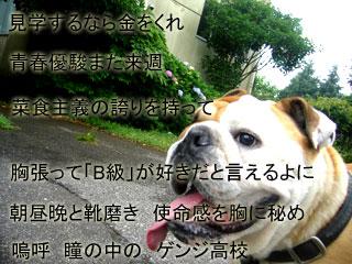 bulldog0006.jpg