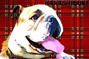 bulldog012.jpg