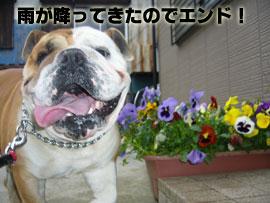 花とゲンジ