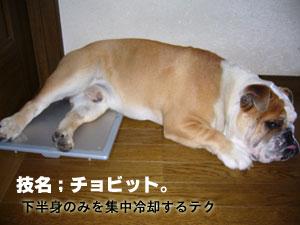 ボード犬ですから
