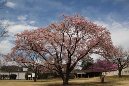 日本花の会結城農場