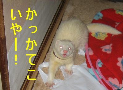 20070307001251.jpg