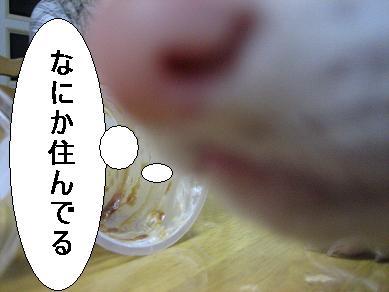 20070322210949.jpg