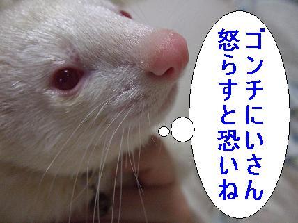 20070325211444.jpg