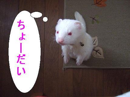 20070330112811.jpg