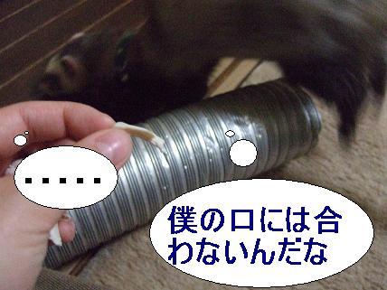 20070405195202.jpg