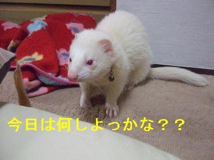 20070429224733.jpg