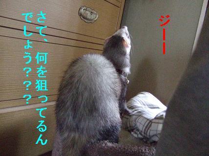 20070516211647.jpg