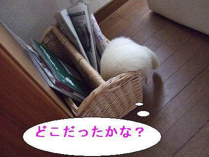 20070522201939.jpg