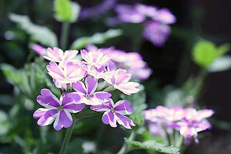 紫色のお花♪