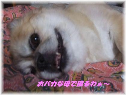 2011_07030032.jpg