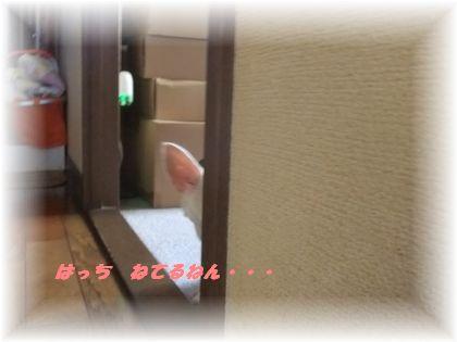 2011_08130004.jpg