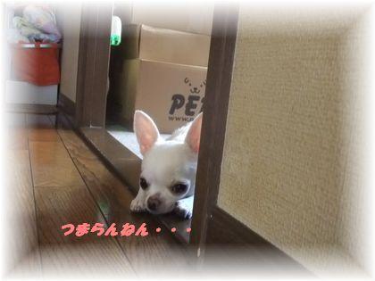2011_08130005.jpg