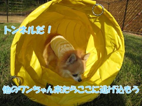 IMG_0190.jpg