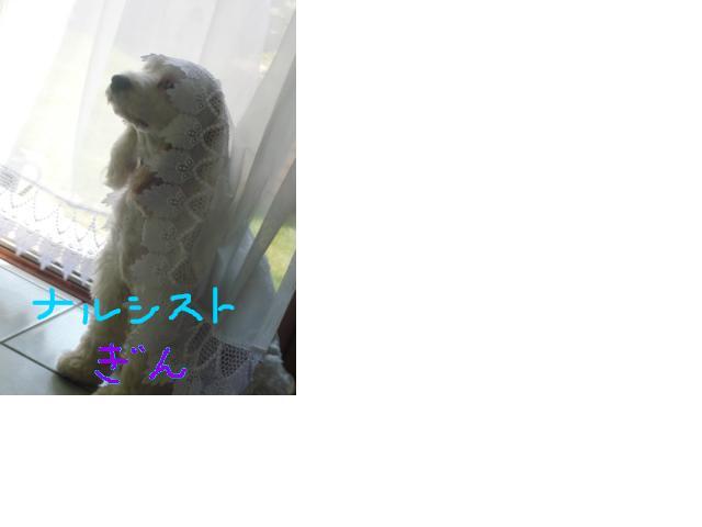 snap_hidehana_201153145410.jpg