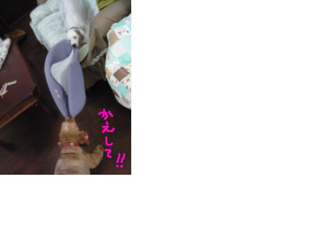 snap_hidehana_20116222239.jpg