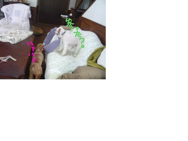 snap_hidehana_201162222742.jpg
