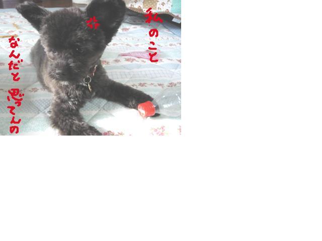 snap_hidehana_201165124223.jpg