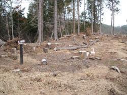 本丸東砦跡