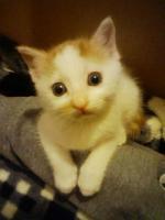 2011/5/24 保護子猫♂