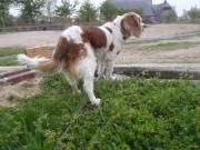 迷い犬後姿2011.5.3