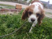 迷い犬2011.5.3