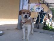 迷い犬2011.5.15