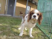キャバリア2011.5.15