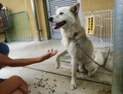 迷い犬 白 2011.7.30