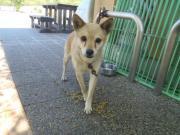 迷い犬②2011.8.13