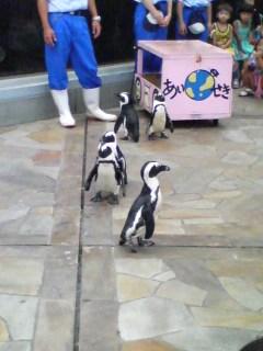 去年撮ったペンギンの写真