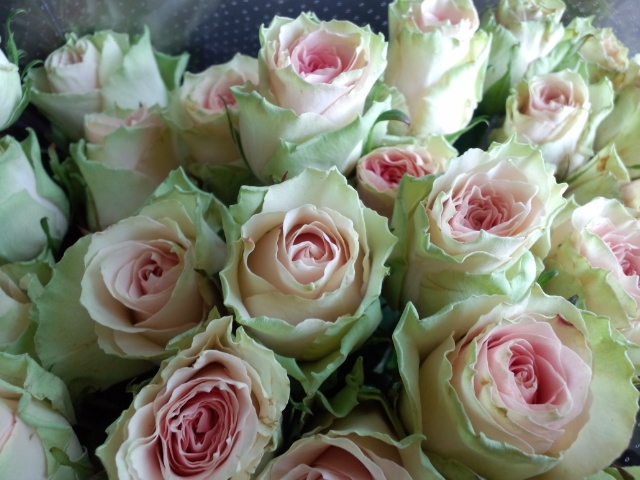 0217-rose1.jpg