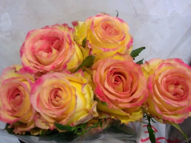 0308-rose1.jpg