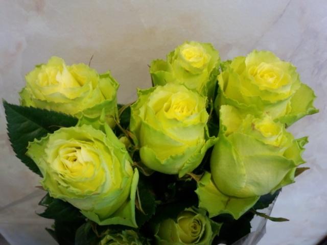 0308-rose2.jpg