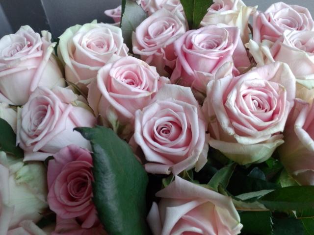 120330-rose1.jpg
