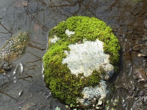「コケ ~石の上に清緑の森(2)」