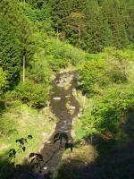 小川が流れてます。