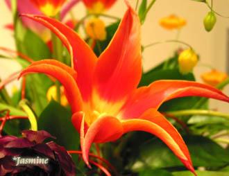 070302flower.jpg