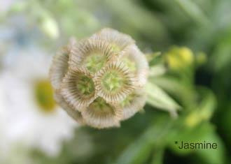 070510flower02.jpg