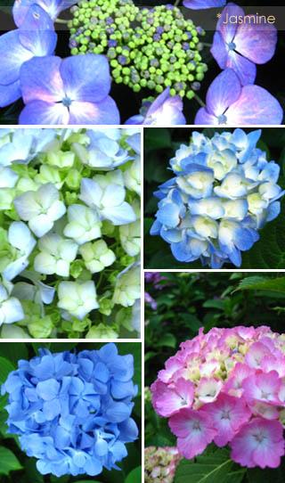 070613flower.jpg