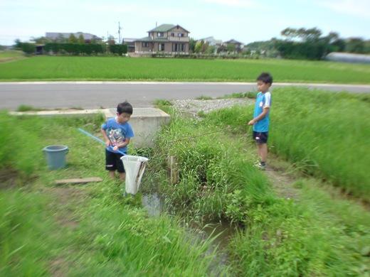 2011ザリガニ釣り