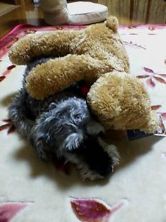 熊さんとお友達