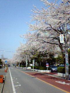 桜01.jpg