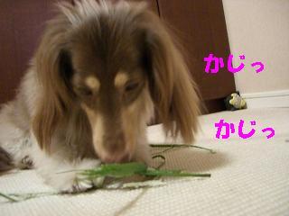 20060809101814.jpg