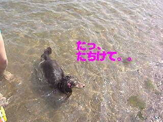 20060818231244.jpg