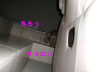 20060828183632.jpg