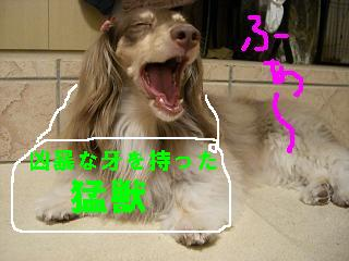 20061027132911.jpg