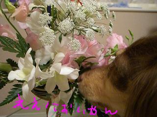 20061213010809.jpg