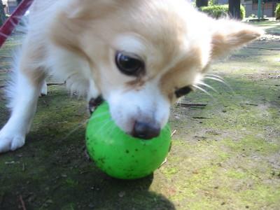 ボールとカール