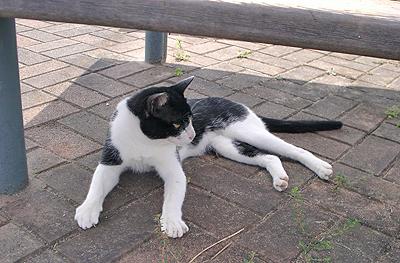道の駅:ゆうひパーク三隅にいた猫